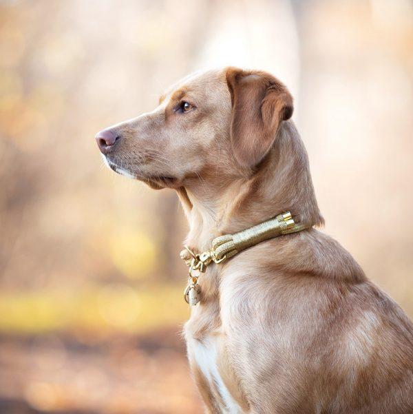 Edles Halsband in Gold mit Hundemarke