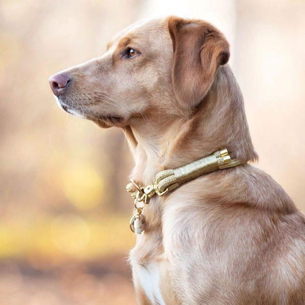 Hundemarke mit Gravur Silber Gold