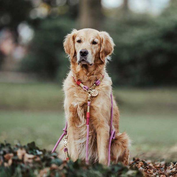 Hundeleine Halsband Pink Gold